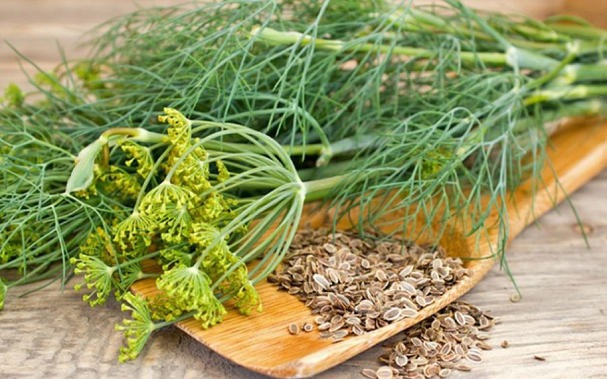 Cele mai bune plante utile în tratarea hemoroizilor | apois.ro